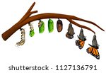 a set of butterfly life cycle... | Shutterstock .eps vector #1127136791
