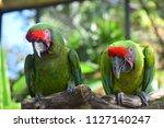 a couple of green bird | Shutterstock . vector #1127140247
