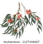 eucalyptus gum leaves and... | Shutterstock .eps vector #1127146067