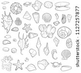 vector seashells  coral and... | Shutterstock .eps vector #1127257877