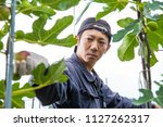 a man harvesting fig in the... | Shutterstock . vector #1127262317