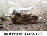 close up of a beautiful... | Shutterstock . vector #1127395799