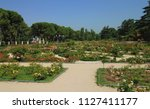 Detail of the Rose Garden (Rosaleda), located in the West Park (Parque del Oeste) in Madrid, Spain, Europe.