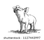 sketch of sniffing pig  hand...   Shutterstock .eps vector #1127443997