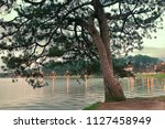 pinus kesiya tree on lake side  ...   Shutterstock . vector #1127458949