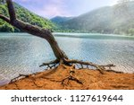alone dry tree of the borabay... | Shutterstock . vector #1127619644
