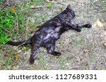 cat is resting on the grass of...   Shutterstock . vector #1127689331
