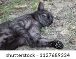 cat is resting on the grass of...   Shutterstock . vector #1127689334