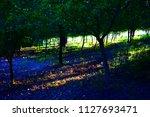 tree under the sunlight at...   Shutterstock . vector #1127693471