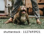 training dogs overcame his... | Shutterstock . vector #1127693921