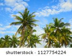 palm trees crowns at blue sky... | Shutterstock . vector #1127754224
