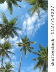 palm trees and blue sky bottom... | Shutterstock . vector #1127754227