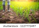 farmer in rubber boots standing ... | Shutterstock . vector #1127772497