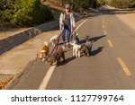 Stock photo professional female dog walker walking a pack of small dogs on a park trail 1127799764