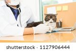 veterinarian is using... | Shutterstock . vector #1127906444