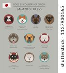 dogs by country of origin.... | Shutterstock .eps vector #1127930165