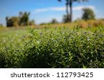 Green grass and sky in the nature - stock photo