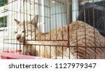 sick cat in cage                ... | Shutterstock . vector #1127979347