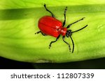 Red Lilly Beetle.
