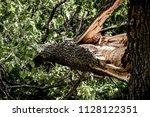 storm broken oak close up | Shutterstock . vector #1128122351