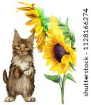 Red Fluffy Cat And Sunflowers...