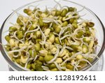 healthy mung sprouts | Shutterstock . vector #1128192611