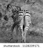 hluhluwe imfolozi park south... | Shutterstock . vector #1128239171