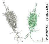 hand drawn australian native... | Shutterstock .eps vector #1128291251