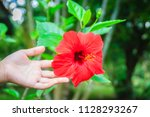 red hybrid hibiscus rosa... | Shutterstock . vector #1128293267
