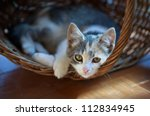 Stock photo cat pretty 112834945