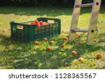 plastic crate full of apricots... | Shutterstock . vector #1128365567