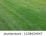 clipped grass on the lawn | Shutterstock . vector #1128424547