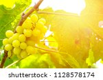 Fresh Green Grapes Over Warm...