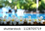 fresh white frangipani plumeria ... | Shutterstock . vector #1128705719