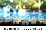 fresh white frangipani plumeria ... | Shutterstock . vector #1128705731