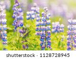 colorful blue and purple wet... | Shutterstock . vector #1128728945