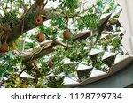 dubai uae 02.23.2018  trees in...   Shutterstock . vector #1128729734