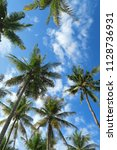 bottom view to the palm trees... | Shutterstock . vector #1128736931