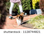 back of curious calico cat... | Shutterstock . vector #1128744821