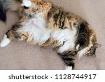 closeup of one calico maine... | Shutterstock . vector #1128744917