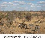 kruger national park  south... | Shutterstock . vector #1128816494