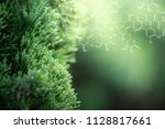 plants background with... | Shutterstock . vector #1128817661