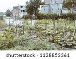 urban gardens for the community ...   Shutterstock . vector #1128853361