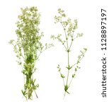 plants on a white background... | Shutterstock . vector #1128897197