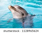 dolphins in the pool. | Shutterstock . vector #1128965624