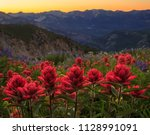 indian paintbrush wildflowers... | Shutterstock . vector #1128991091