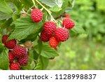 branch of ripe raspberries in... | Shutterstock . vector #1128998837
