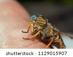 Horsefly On The Human Hand