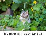 cute kitten in summer | Shutterstock . vector #1129124675