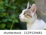 female cat portrait | Shutterstock . vector #1129124681